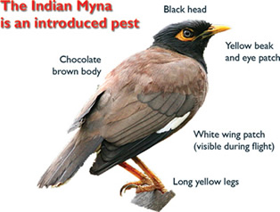myna-id-for-web.jpg